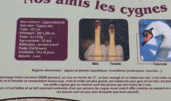 Panneau pédagogique - Ville de Marignane