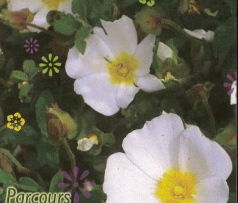Guide illustré (texte) du parcours botanique de la colline - Service Environnement