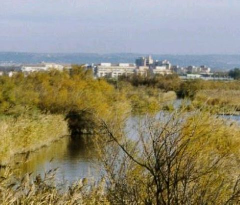 Etang de Bolmon - Photo Ville de Marignane
