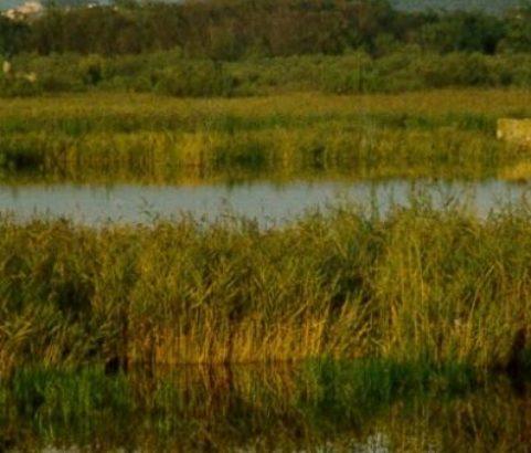 L'étang de Bolmon - Photo Ville de Marignane